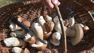 Une cueillette de champignons (illustration). (CLAUDE PRIGENT / MAXPPP)