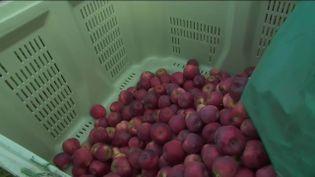 La hausse des matières premièrespousse certains agriculteurs à augmenter leurs prix de vente.Cettesituation devientcompliquée pour les professionnels du secteur qui s'inquiètent de cette inflation. (Capture d'écran France 2)