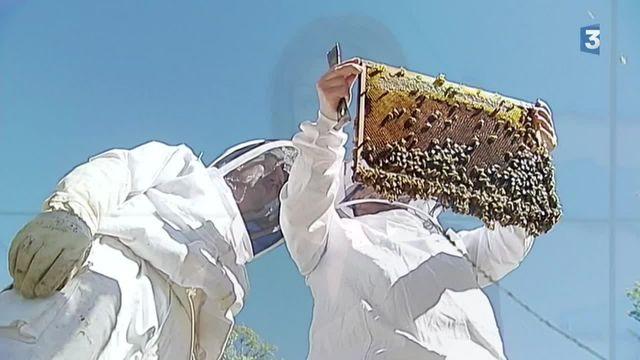 Thierry Dufresne à la rescousse des abeilles