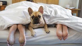 Un tiers des Français qui ont un animal avouent le laisser accéder à leur lit (CAIA IMAGE / SCIENCE PHOTO LIBRA / NEW)