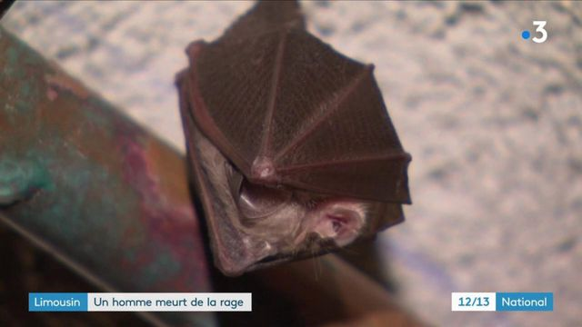 Limousin : retour sur le cas rare d'un habitant décédé en août 2019 après avoir été en contact avec une chauve-souris