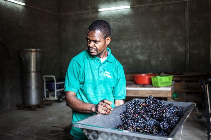 Un homme travaille les raisins au domaine viticole Assiami, sur le plateau de Batéke, dans le sud-est du Gabon, le 22 mai 2019. (CAMILLE MALPAT / AFP)