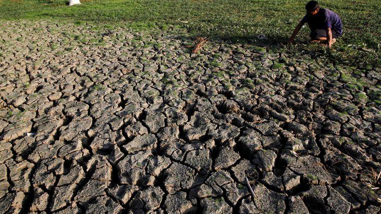 Un agriculteur fait face à l'aridité de ses terres à Aceh en Indonésie, le 22 juillet 2017. Une sécheresse a empêché le riz de pousserdans cette région. (JUNAIDI HANAFIAH / ANADOLU AGENCY)