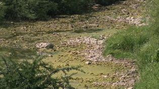 Canicule : la crainte d'une nouvelle sécheresse dévastatrice (FRANCE 2)