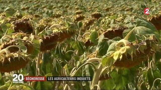 Sécheresse : les agriculteurs inquiets