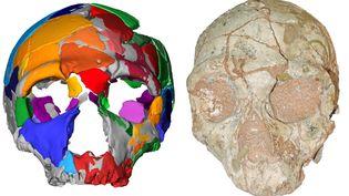 Crâne et modélisation du crâne de Apidima 1, Photographie de l'université de Tübingen, juillet 2019 (KATERINA HARVATI / EBERHARD KARLS UNIVERSITY OF TUE)