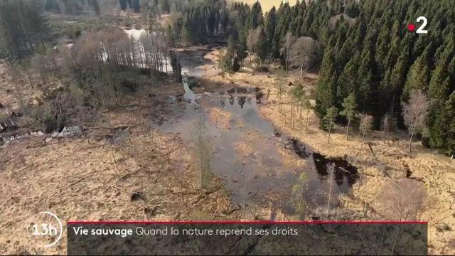 Grande-Bretagne : la nature reprend ses droits sur d'anciennes terres agricoles