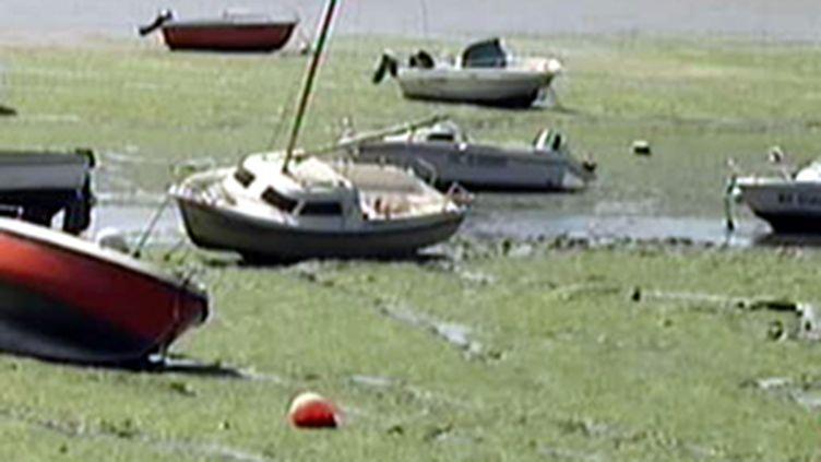 La question de la nocivité des gaz émis par les algues vertes a été relancée après la mort d'un cheval le 28 juillet (© France)