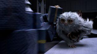 """Les Animaux fantastiques"" de David Yates  (Warner Bros. France )"
