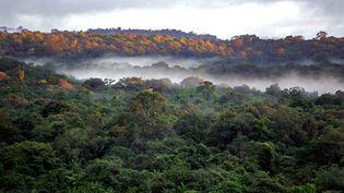 La forêt guyanaise le 2 mars 2007. (JODY AMIET / AFP)