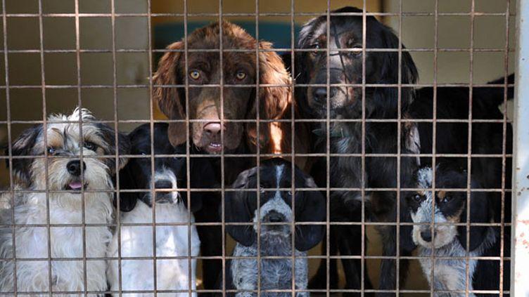 (40 000 animaux domestiques sont abandonnés chaque été  © MAXPPP)