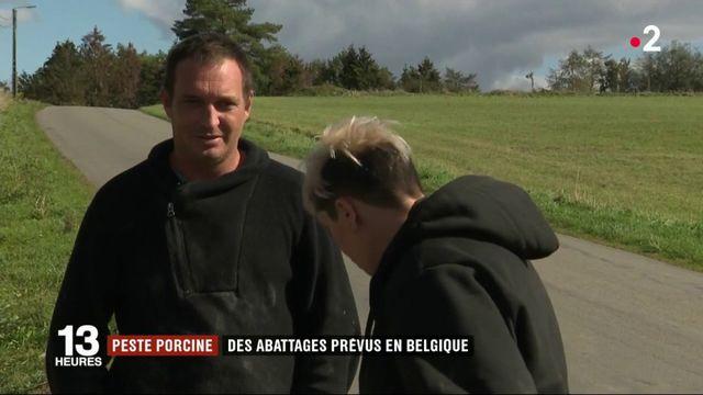 Peste porcine : des abattages prévus en Belgique