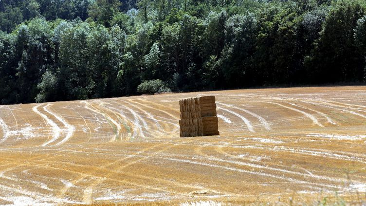 Le sénateur LR de Haute-Saône Michel Raison a envoyé un courrier aux ministres de l'Agriculture et des Transports. (JULIO PELAEZ / MAXPPP)