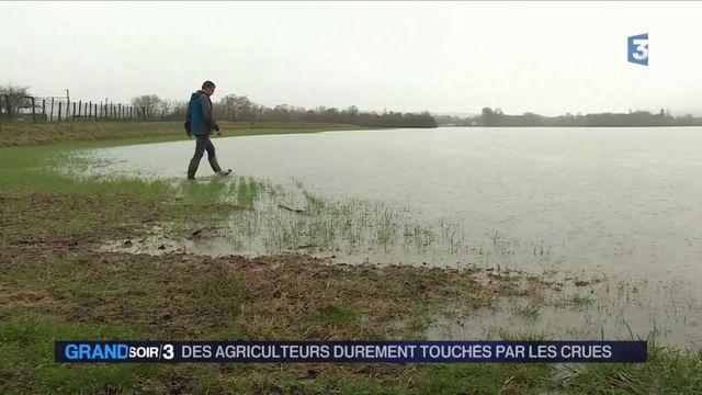 Crue de la Seine : les récoltes durement touchées