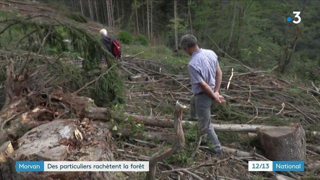 Dans le Morvan, des particuliers rachètent la forêt