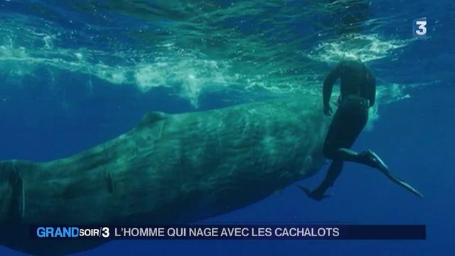 """""""Les cachalots, c'est 40 tonnes de délicatesse"""""""