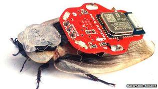 """Un cafard sur lequel a été placé le """"sac à dos électronique"""" de l'application Roboroach. (BACKYARD BRAINS)"""
