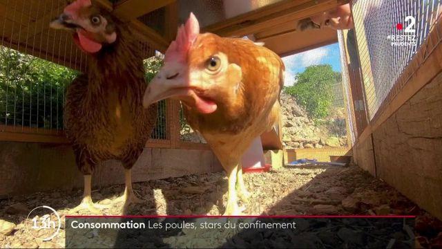 Crise sanitaire : les poules ont le vent en poupe