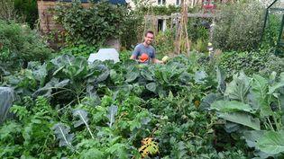 Joseph Chauffrey dans son potager en permaculture, à Sotteville-les-Rouen. (ISABELLE MORAND / JOSEPH CHAUFFREY / RADIO FRANCE / FRANCE INFO)