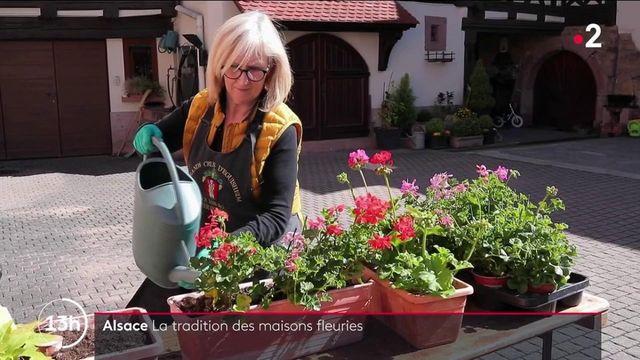 Alsace : les riverains d'Eguisheim préparent dans la joie le concours de fleurs