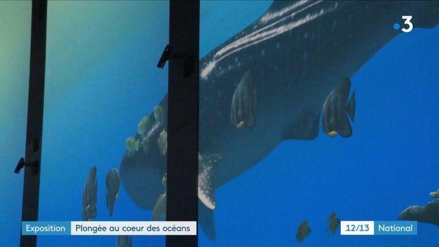 Immersion au plus près de la barrière de corail, en plein Monaco