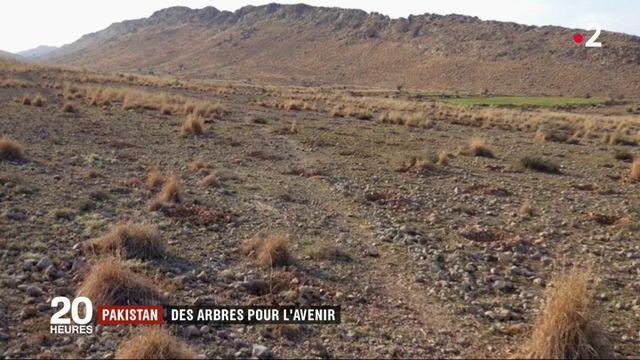Pakistan : 1 milliard d'arbres plantés pour l'avenir