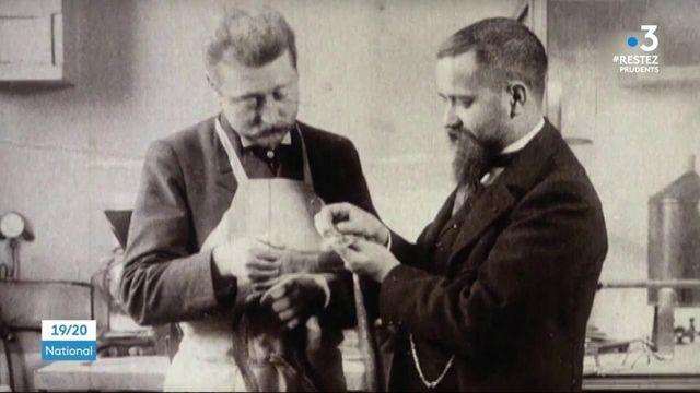 Santé : l'histoire du BCG, un vaccin centenaire étudié dans le cadre du Covid