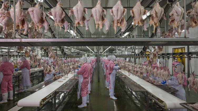 Une usine de transformation de poulets à Jiangsu (Chine), le 16 juin 2016.  (GEORGE STEINMETZ / COSMOS)
