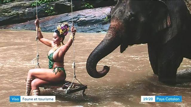 La triste réalité du tourisme animalier