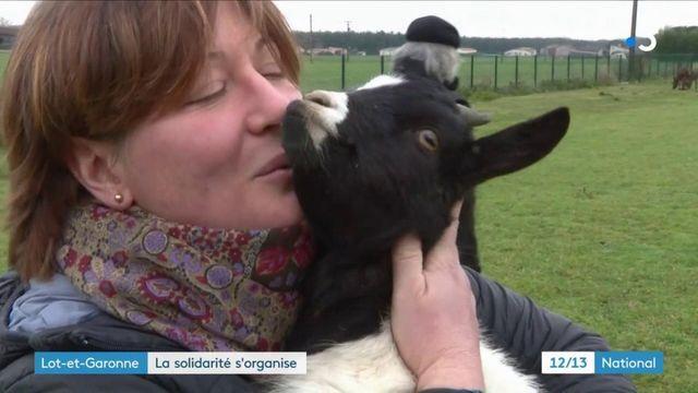 Inondations : dans le Lot-et-Garonne, la mobilisation sauve un troupeau de chèvres