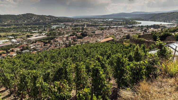 Vignes sur les coteaux de Condrieu, en Rhône-Alpes (photo d'illustration) (MAXPPP)