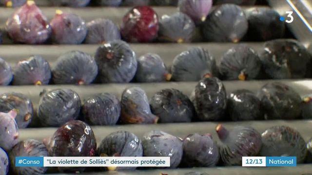 """Consommation : la figue """"violette de Solliès"""" désormais protégée"""