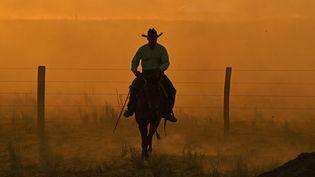 Un cowboy à Sinop, au Brésil, le 10 août 2020. (CARL DE SOUZA / AFP)