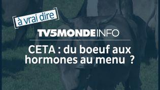 Capture d'écran (TV5MONDE)