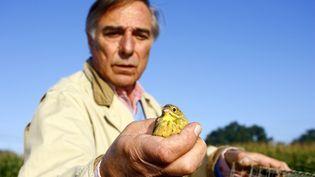 Le président de la Ligue de protection des oiseaux (LPO), Allain Bougrain-Dubourg, s'apprête à remettre en liberté un ortolan prisonnier d'un piège de braconniers le 30 août 2009 à proximité de Tartas (Landes) (NICOLAS TUCAT / AFP)