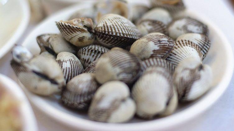 Gastro-entérite : vaste rappel de coquillages de l'Ouest de la France (Crédits Photo : © soscs / Pixabay)