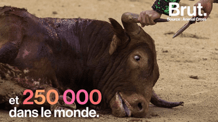 Alors qu'un matador est mort dernièrement dans les Landes, Brut a compilé les chiffres qui entourent la pratique de la tauromachie. (Brut)