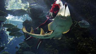 A Monaco, le plongeur français Pierre Frolla s'est frotté aux raies, le 21 décembre 2012. (ERIC GAILLARD / REUTERS)
