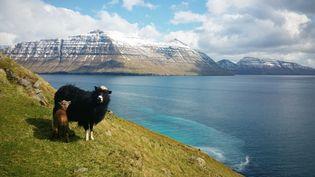 """Les îles Féroé, aussi surnommées """"îles des moutons"""", ont utilisé cinq des 80 000 animaux pour faire découvrir leur pays, dans une vidéo postée le 12 juillet 2016. (SIMON DUBREUIL / MOMENT RF / DATAICHI / GETTY IMAGES)"""