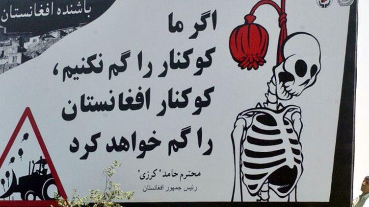 L'Afghanistan produit 90% de l'opium mondial, principalement dans le sud du pays, bastion des talibans.  (AFP PHOTO/ SHAH Marai)