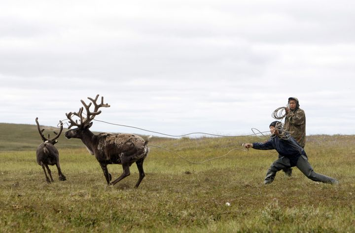 Des éleveurs de rennes, dans la péninsule deIamal, en Sibérie (Russie), le 2 août 2009. (DENIS SINYAKOV / REUTERS)
