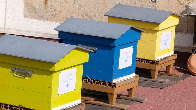 Les trois ruches sur le toit de l'hotel Florence, à Nice. (ISABELLE MORAND / DIDIER HIRSCH / RADIO FRANCE / FRANCE INFO)