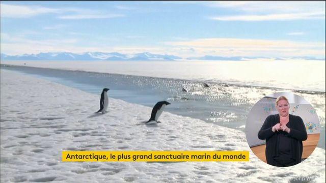 VIDEO. Le plus grand sanctuaire marin du monde créé en Antarctique