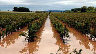 Capestang (Hérault), des vignes noyées après les inondations, el 29 septembre 2014 ( MAXPPP)