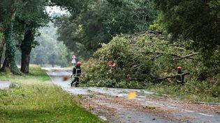Des techniciens évacuent des arbres couchés sur la chaussée après le passage de la tempête Amélie, près de Hossegor (Landes), le 3 novembre 2019. (JEROME GILLES / NURPHOTO / AFP)