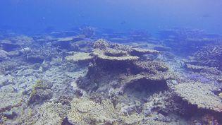 Une partie endommagée de la Grande Barrière de corail, qui se situeau nord-est de l'Australie. (ANDREAS DIETZEL / ARC CENTRE OF EXCELLENCE FOR CORAL REEF STUDIES / AFP)