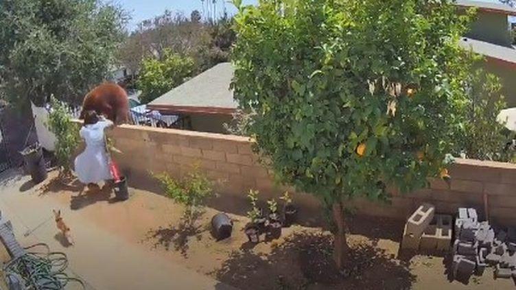 Hailey Morinico, repousse une ourse sur le muret de sa maison à Bradbury (Californie). (CAPTURE D'ÉCRAN TIKTOK)