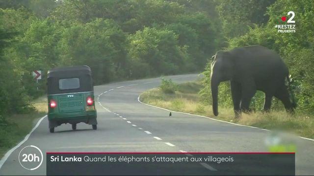Sri Lanka : quand les éléphants s'attaquent aux villageois