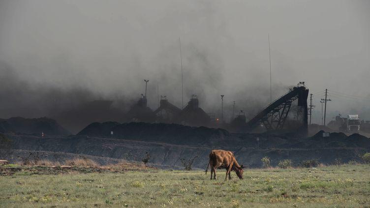 Une vache broute devant une usine à charbon, dans le Mpumalanga, en Afrique du Sud. (MUJAHID SAFODIEN / AFP)
