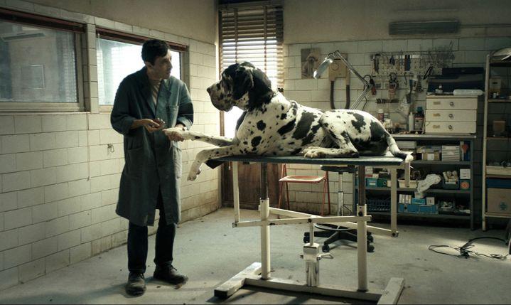 """""""Dogman"""" de Matteo Garrone, l'histoire d'un toiletteur pour chien hanté par la vengeance.  (Greta De Lazzaris)"""
